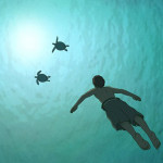The Red Turtle 16
